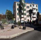 piante-in-piazza-emilia